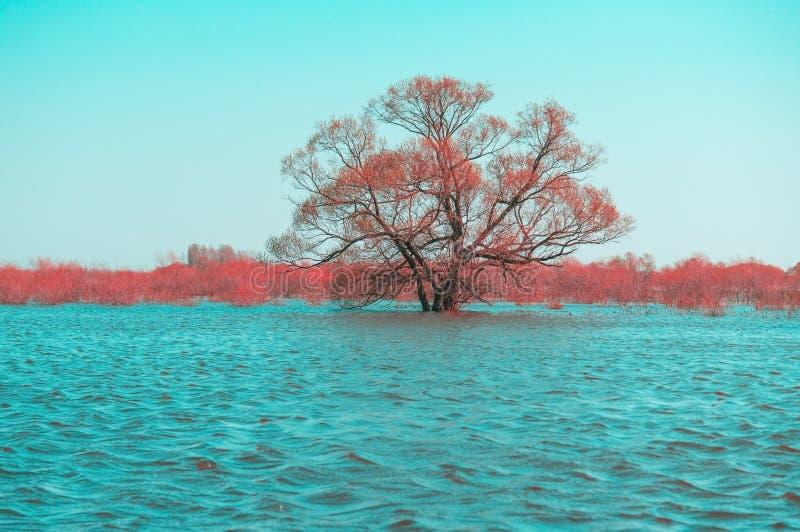 översvämmad tree arkivbilder