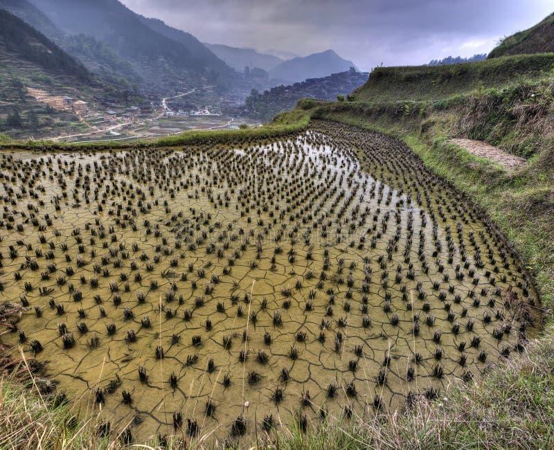 Översvämmade risfält i porslinet, Xijiang miaoby, Guizhou Prov royaltyfri bild