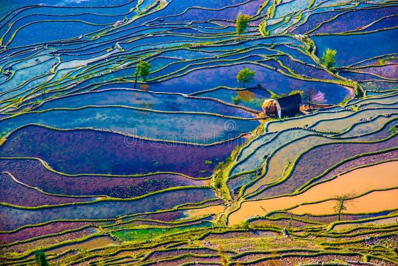 Översvämmade risfält i södra Kina arkivfoton