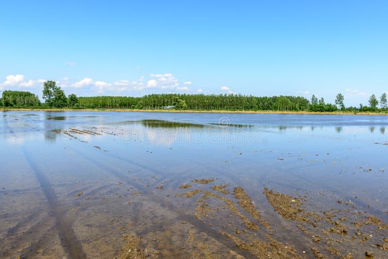 Översvämmade risfält, Lomellina (Italien) royaltyfri foto