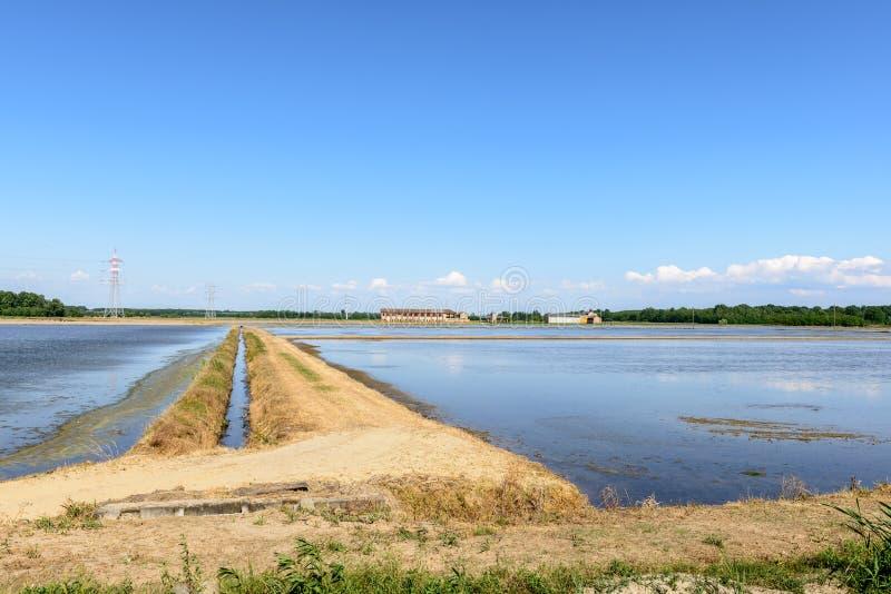 Översvämmade risfält, Lomellina (Italien) royaltyfri fotografi