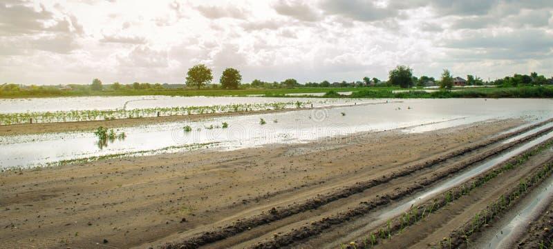 Översvämmat fält som ett resultat av hällregn Flod på lantgården Naturkatastrof- och skördförlustrisker ?kerbruk lantbruk ukraine royaltyfri bild