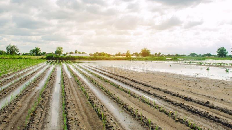 Översvämmat fält som ett resultat av hällregn Flod på lantgården Naturkatastrof- och skördförlustrisker ?kerbruk lantbruk ukraine royaltyfria bilder
