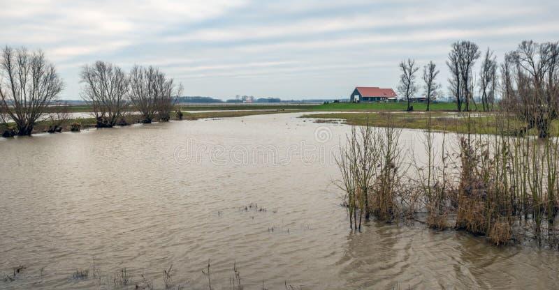 Översvämmat polderlandskap i Nederländerna royaltyfri foto