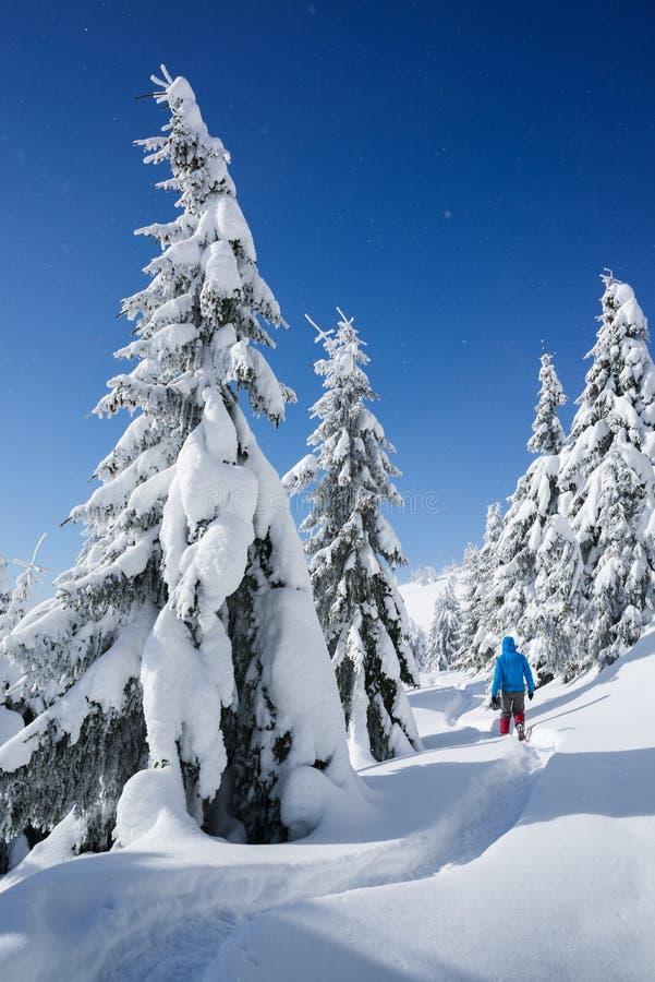 Övervintra att fotvandra i en bergskog i snön royaltyfria foton
