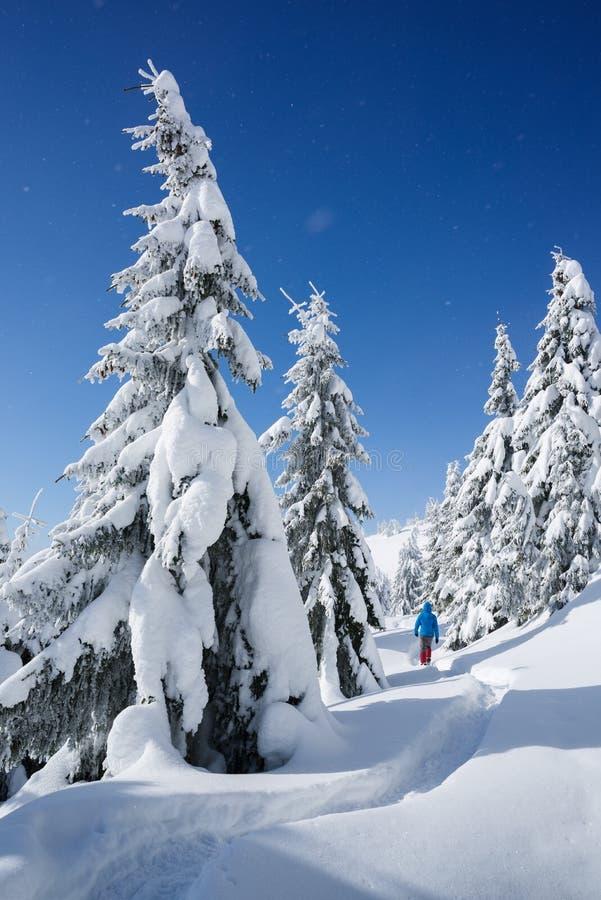 Övervintra att fotvandra i en bergskog i snön arkivfoton