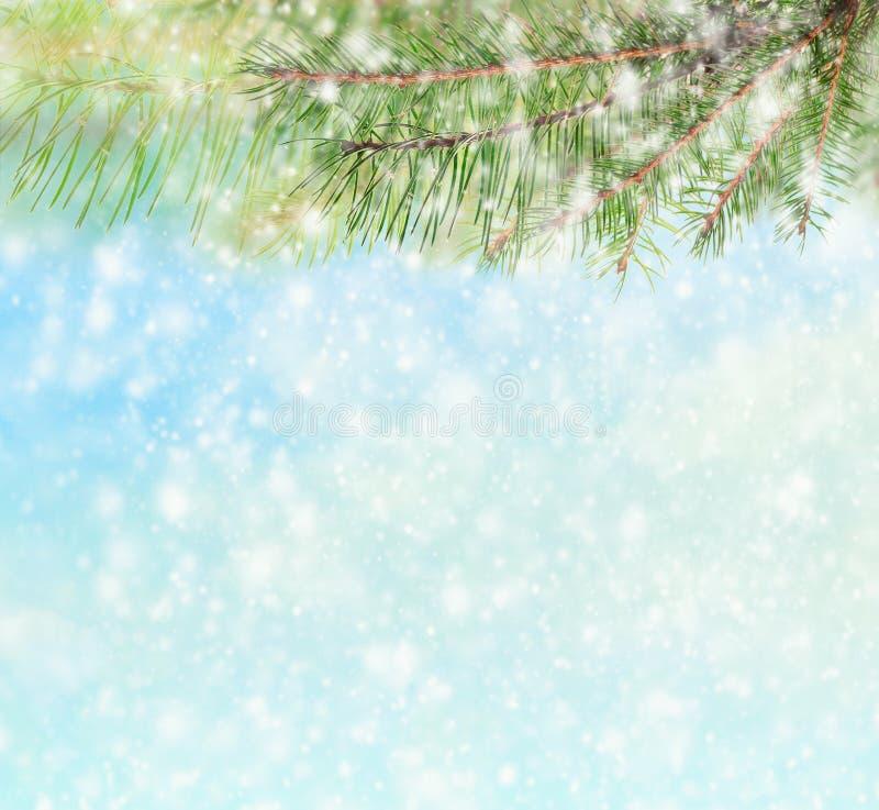Övervintra bakgrund med filialer av det prydliga trädet och snöa royaltyfri bild