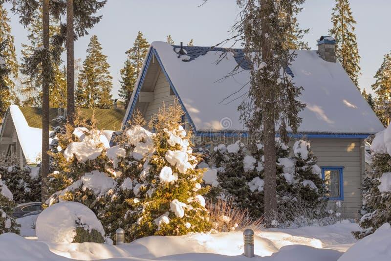 Övervintra den snöig vägen i skogen mellan höga granträd, tidiga wi arkivbilder