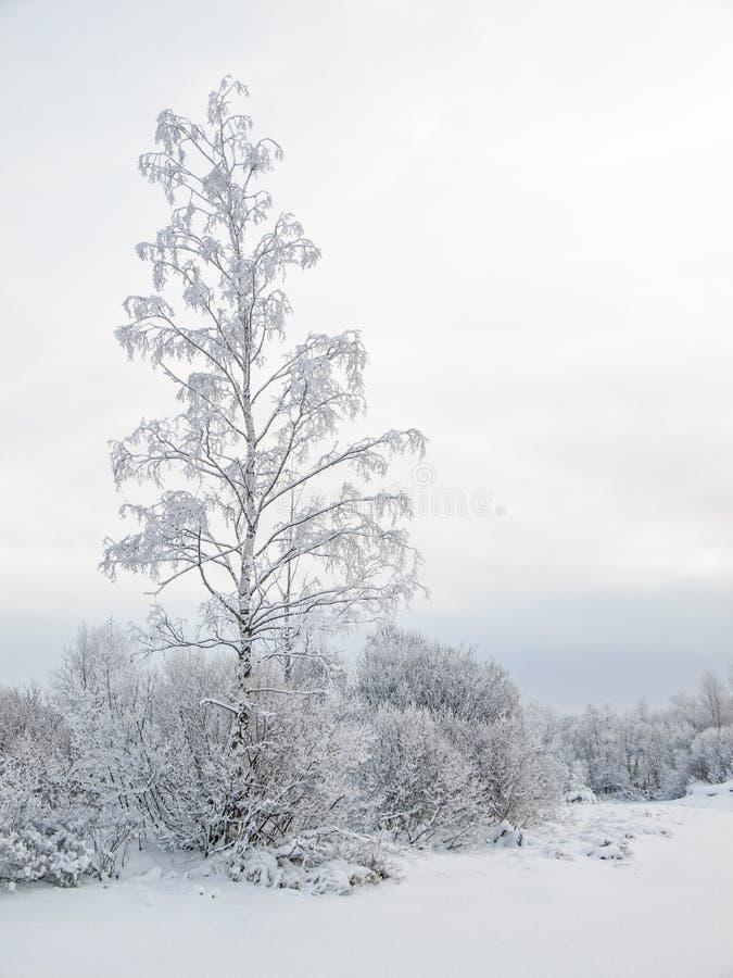Övervintra det molniga landskapet med frost på filialer av ett träd royaltyfri bild