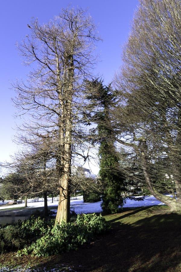 Övervintra i kungliga Leamington Spa - pumprum/Jephson trädgårdar royaltyfri fotografi