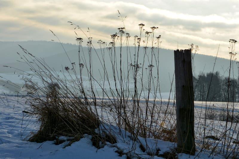 Övervintra landskap med soluppgången med trästolpen och höga växter royaltyfri fotografi