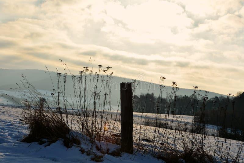 Övervintra landskap med soluppgången med trästolpen och höga växter arkivbilder