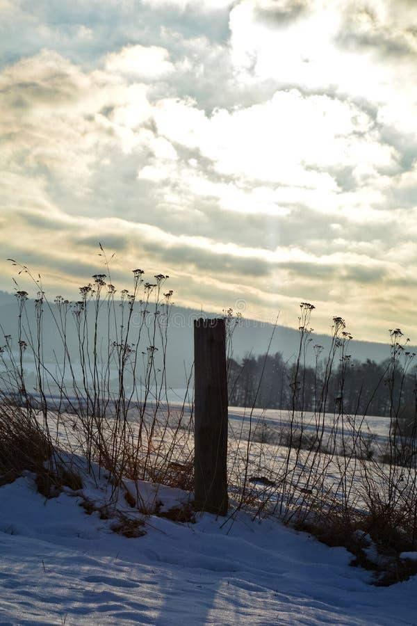 Övervintra landskap med soluppgången med trästolpen och höga växter arkivfoto