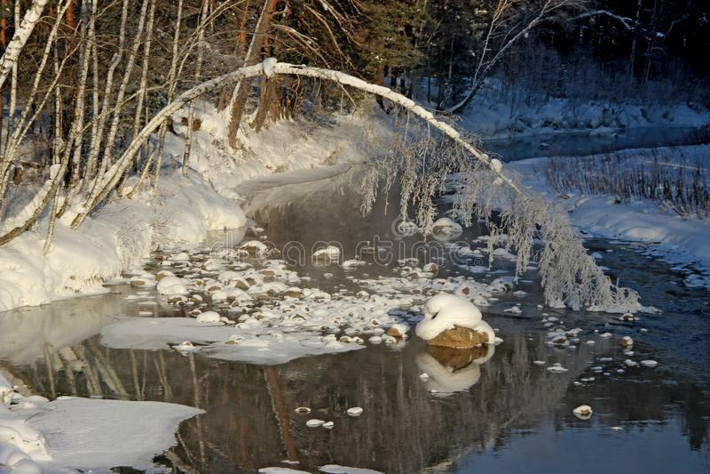 Övervintra landskapet av enfryst flod och en tunn stam av en björk som är nedböjd in i vatten royaltyfri foto