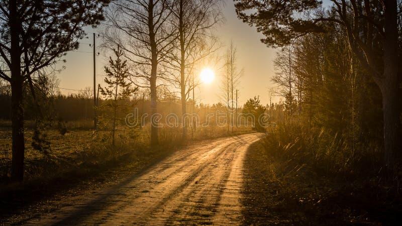 Övervintra landskapet av solnedgången över landsvägen med träd royaltyfri foto