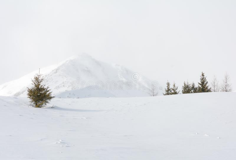 Övervintra landskapet i en bergdal med snö arkivbild