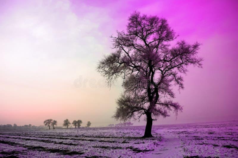 Övervintra landskapet i morgon, snö och träd med den ultravioletta signalen arkivbild