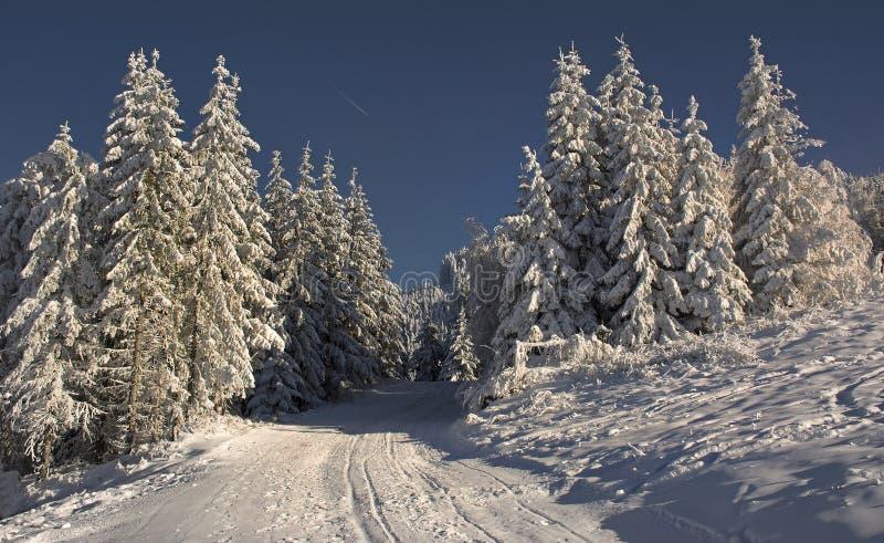 Övervintra landskapet med skogen för granträd som täckas av det tunga insnöade Postavaru berget, den Poiana Brasov semesterorten royaltyfri fotografi