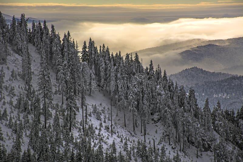 Övervintra landskapet med skogen för granträd som täckas av det tunga insnöade Postavaru berget, den Poiana Brasov semesterorten, arkivfoton