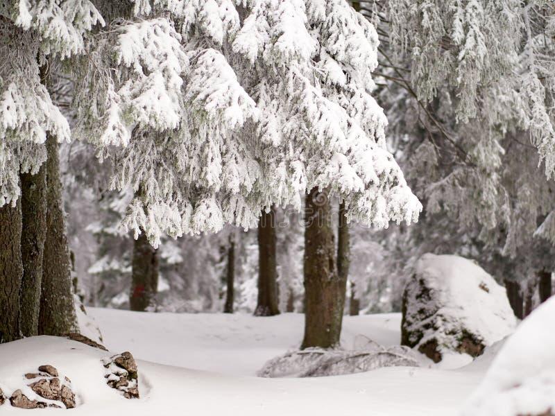 Övervintra landskapet med träd och berg som täckas med snö royaltyfri fotografi