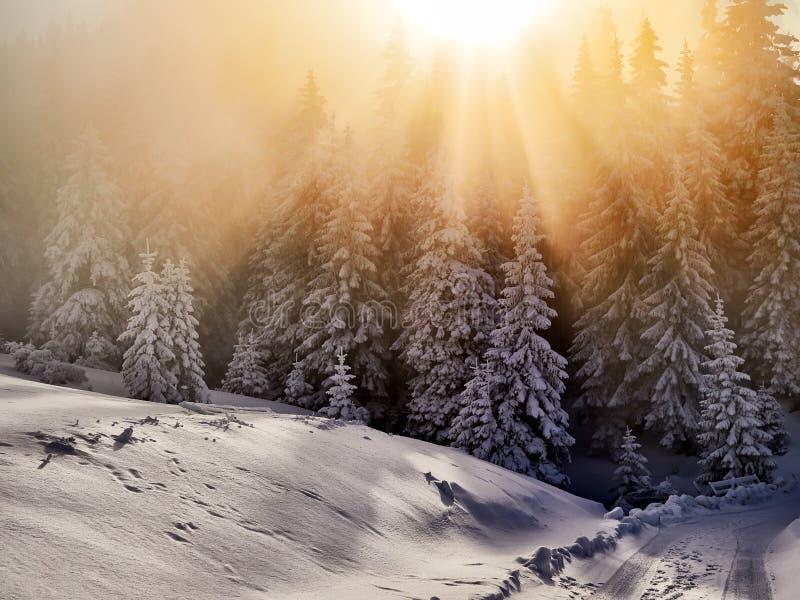 Övervintra landskapet med träd och berg som täckas med snö arkivbild