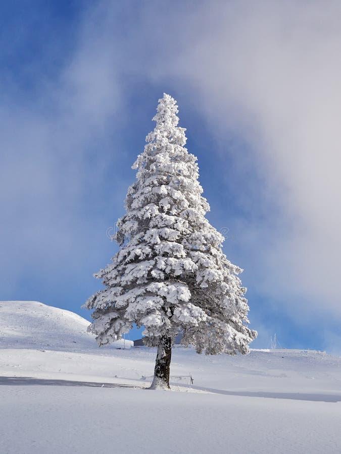 Övervintra landskapet med träd och berg som täckas med snö arkivfoton