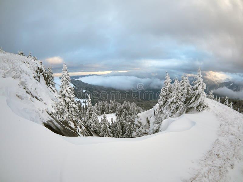Övervintra landskapet med träd och berg som täckas med snö royaltyfria foton