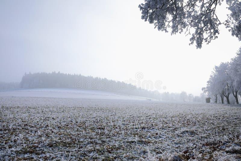 Övervintra landskapet och snöa slågna in träd i Sumava, Tjeckien, royaltyfri fotografi