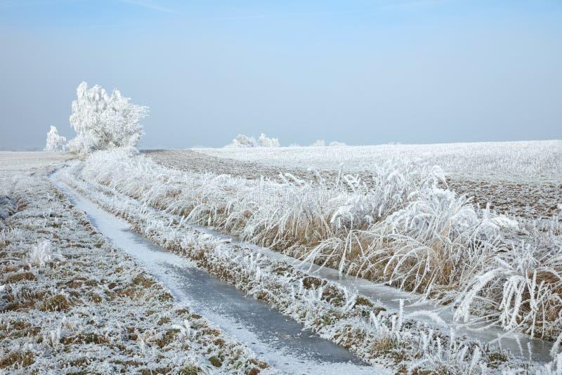 Övervintra landskapet och snöa slågna in träd i Sumava, Tjeckien, royaltyfri bild