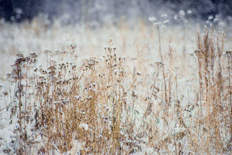 Övervintra landskapträd och torrt gräs i skogen som täckas med frost nära fältet det härliga ljuset av inställningen royaltyfri bild