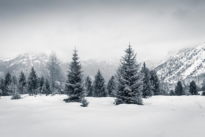 Övervintra lynnet i Val di Fassa, Dolomites, Italien royaltyfri bild