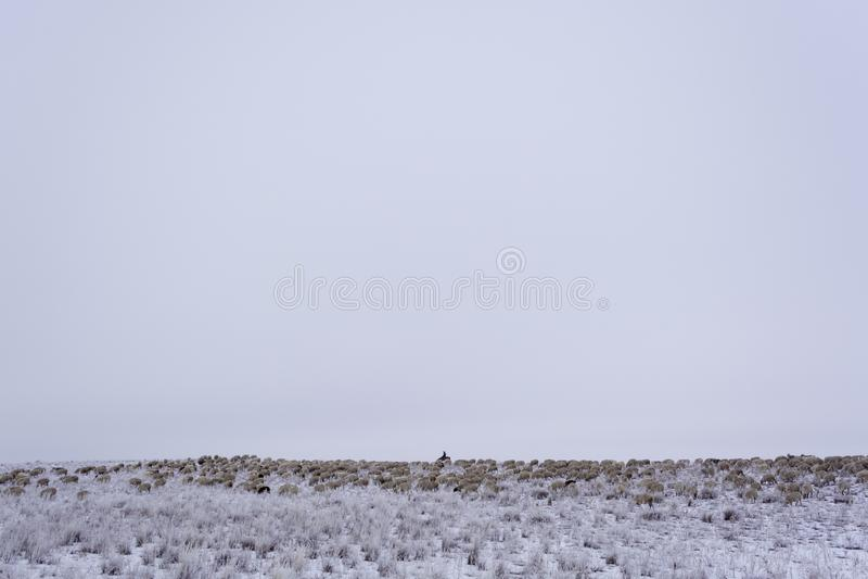 övervintra minimalism Monokrom grå himmel Herde med en flock Nomad- hushåll Kasakhstan arkivfoton