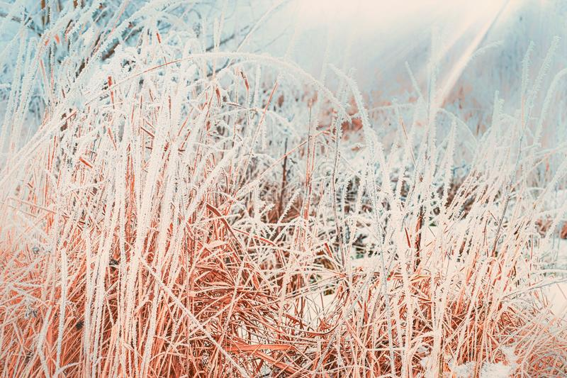 Övervintra naturbakgrund med slut upp av djupfryst och snö täckt gräs fotografering för bildbyråer