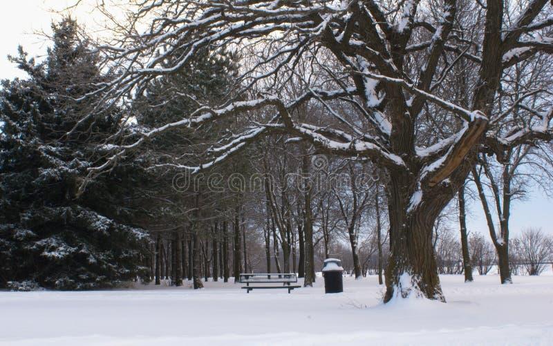 Övervintra platsen med åtskilliga träd inklusive ett sörjaträd och en jätte- ek med insnöat förgrunden fotografering för bildbyråer