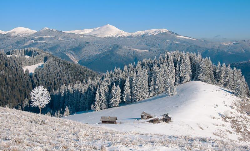 Övervintra rimfrosten och snöa dolda granträd på bergssidan royaltyfri foto