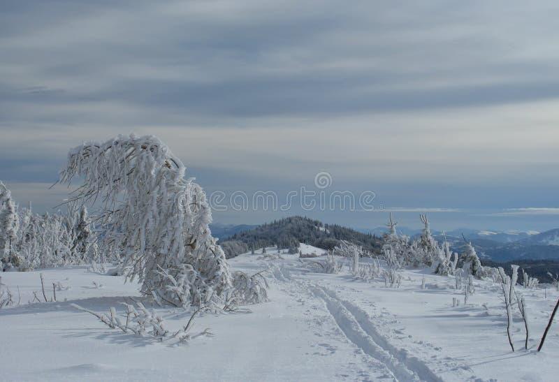 Övervintra rimfrosten och snöa dolda granträd på bergssidan royaltyfri fotografi