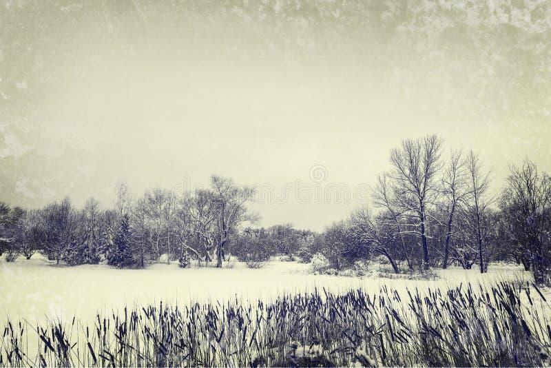 Övervintra sjön och träd, tappningstilfoto royaltyfri bild