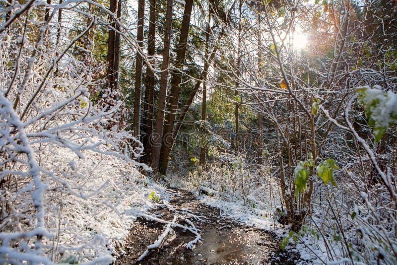 Övervintra skogen i den slovakiska paradisnationalparken, Slovakien royaltyfri foto