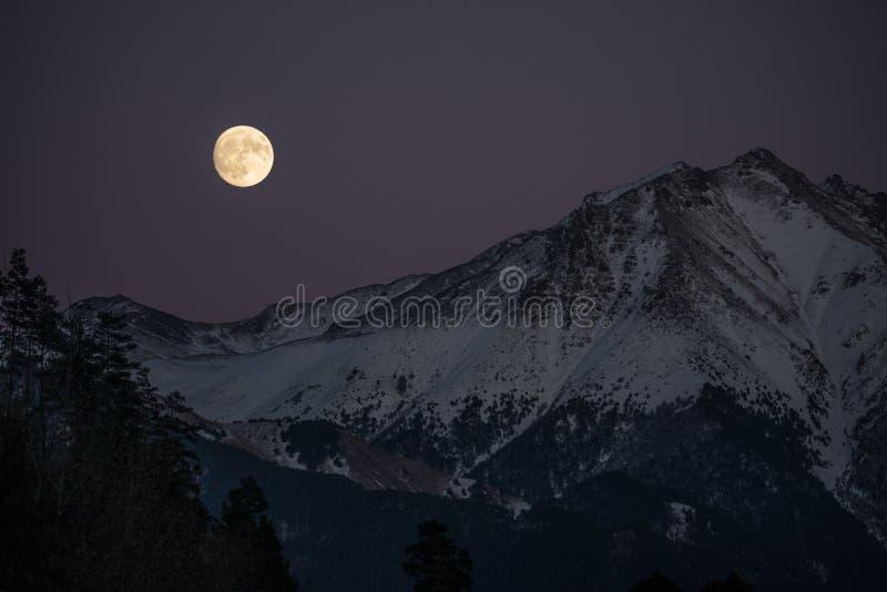 Övervintra skogen och snöa berg under ljuset av den fulla toppna månen royaltyfri bild