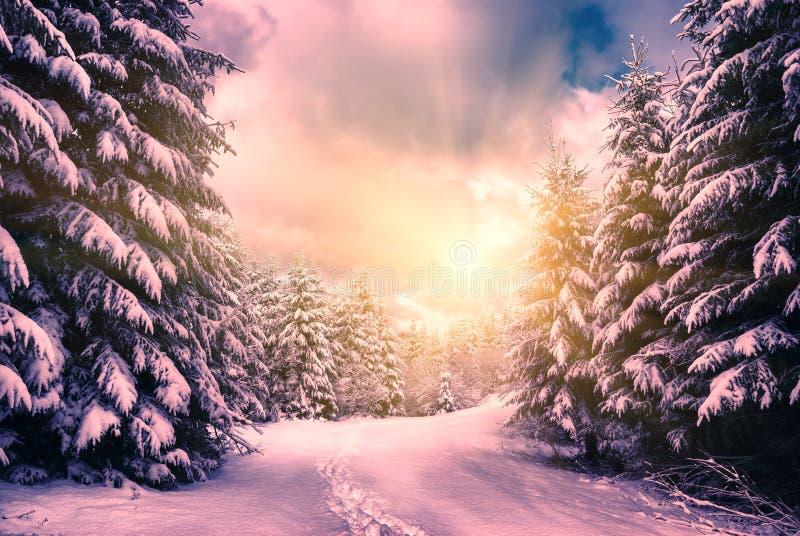 Övervintra solnedgången i filte för stil för skog för Carpathian berg en Retro arkivfoto