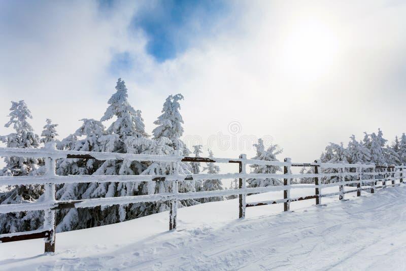Övervintra träd och trästaketet som täckas i snö som gränsar en mou royaltyfri fotografi