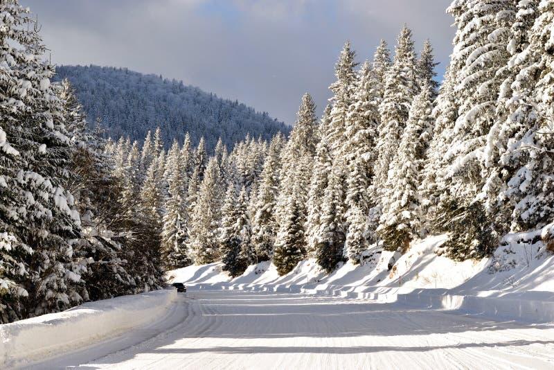 Övervintra vägen, berg och sörja träd som täckas i snö royaltyfri foto