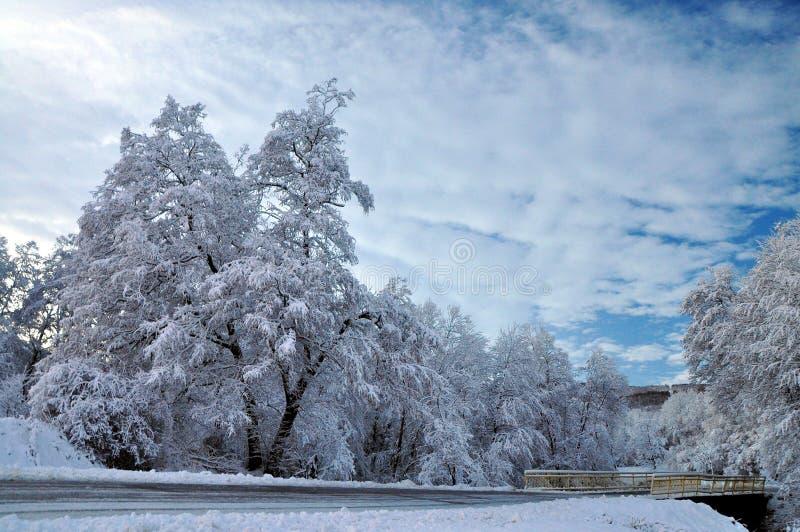 Övervintra vägen och forozen träd arkivfoto