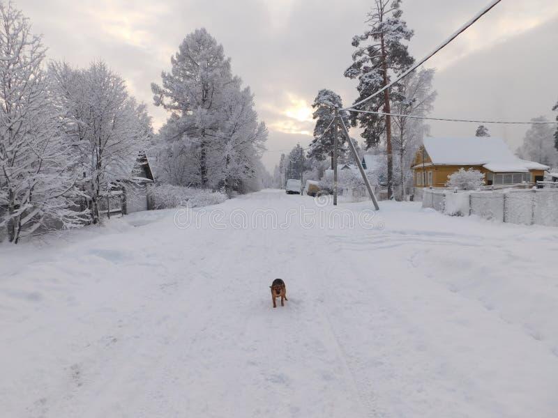 övervintrar trees för snow för sky för lies för frost för mörk dag för bluefilialer arkivfoton