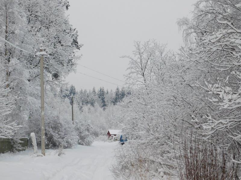 övervintrar trees för snow för sky för lies för frost för mörk dag för bluefilialer fotografering för bildbyråer