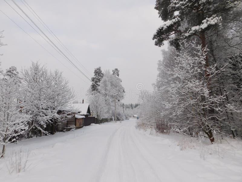 övervintrar trees för snow för sky för lies för frost för mörk dag för bluefilialer royaltyfria foton