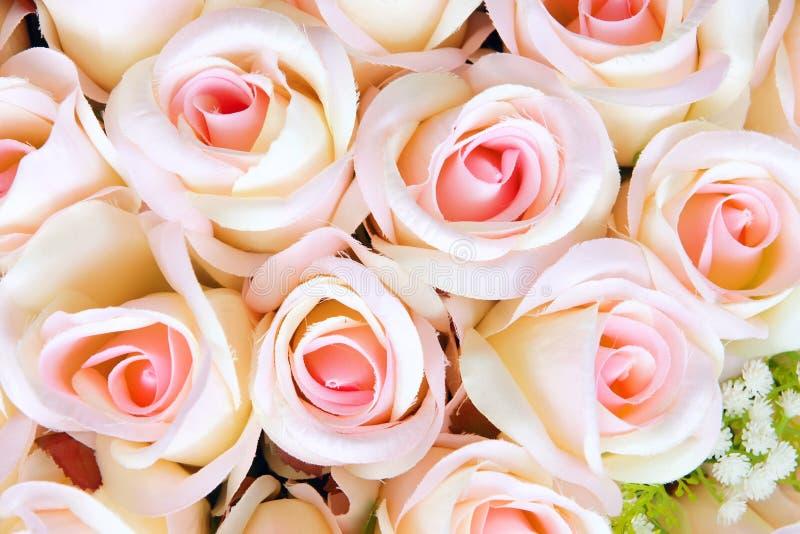 övre för täta blommor för skönhet naturligt rosa rose arkivbild