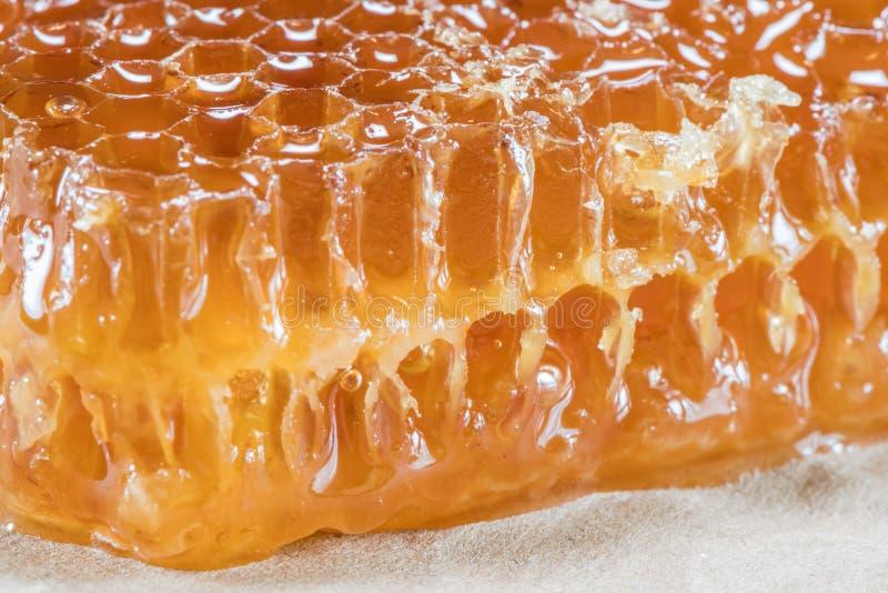 Övre kvarter för slut av Honey Comb royaltyfri bild