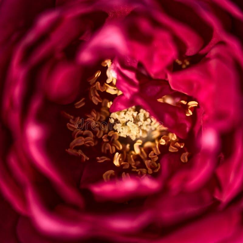 Övre sikt för slut av en röd blomma arkivbilder