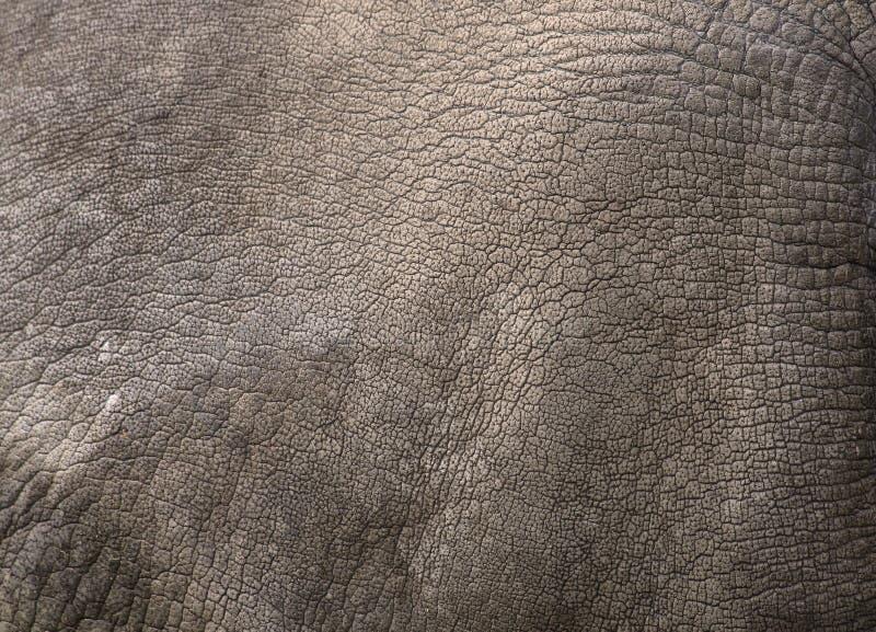 Övre sikt för slut av noshörninghud arkivbilder